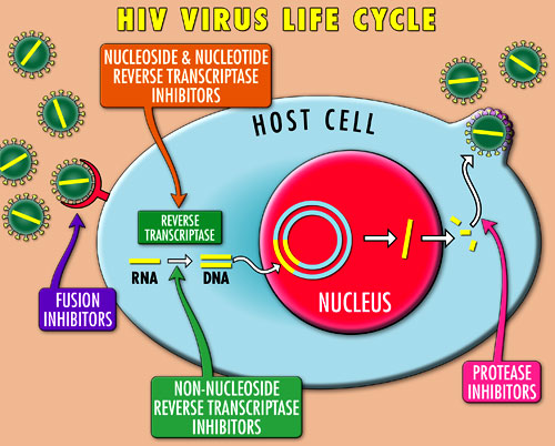 HIV PHARMACOLOGY EBOOK DOWNLOAD